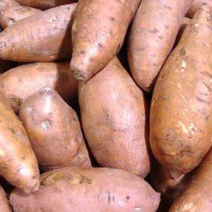 Jamaica Sweet Potato
