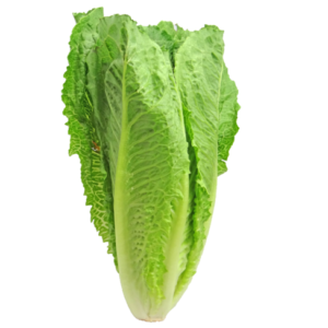 Roman Lettuce